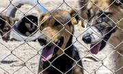 ویدئو | سگ کشی در اهواز؛ کسی گردن نمیگیرد