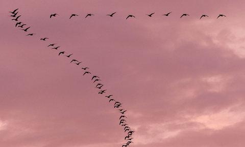 پرندگان | در راههای بیشناسه آسمان