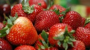 ادامه ماجرای توت فرنگیهای سوزن دار در استرالیا | یک زن دستگیر شد