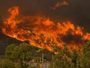 تلفات آتش سوزی کالیفرنیا به ۳۱ نفر رسید