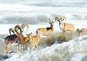 چگونه در فصل سرد با حیاتوحش رفتار کنیم؟