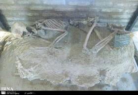 اسکلت باستانی پنج هزار و ۵۰۰ ساله