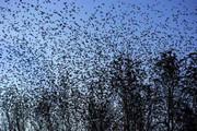 شبکه اینترنت ۵جی عامل احتمالی مرگ پرندگان در هلند