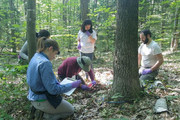 کشف ویروسهای بسیار بزرگ در خاک جنگل