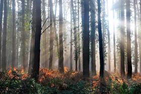ایتالیا؛ برای هر نفر ۲۰۰ درخت وجود دارد