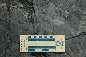 کوچکترین ردپای دایناسور دنیا در کره جنوبی کشف شد