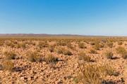 بارش باران بعد از ۵۰۰ سال حیات را در یک صحرا نابود کرد