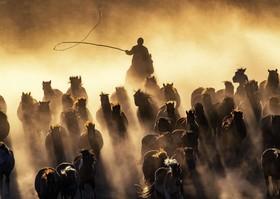 عکس روز: اسبهای قزاق