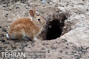هفت قاب پائیزی از بوستان جنگلی چیتگر