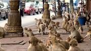میمونها