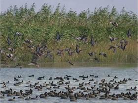 علت مرگ دستهجمعی پرندگان مهاجر در مازندران | شیوع ۳ نوع آنفولانزا