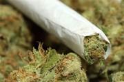 گل ؛ دومین مخدر شایع در کشور | این ماده مخدر اعتیادآور و بسیار خطرناک است