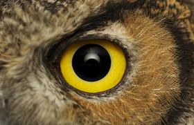 نمای نزدیک چشم حیوانات