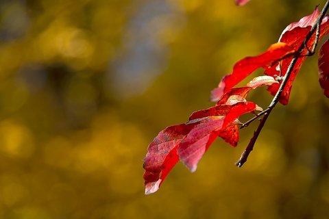 طبیعت پاییزی النگدره؛ یکی از هفت منطقه نمونه گردشگری کشور