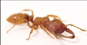 مورچه ۳۲۰ کیلومتری