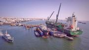ماهیگیری صنعتی پرندگان دریایی را از بین میبرد