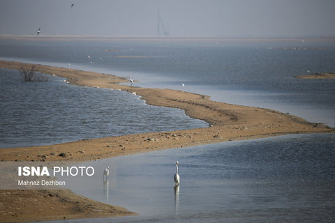 پرندگان مهاجر در تالاب هورالعظیم (عکس)