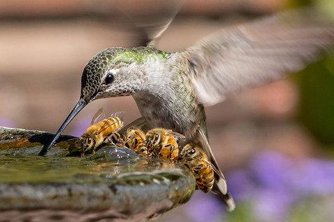 مسابقه جوایز عکاسی حیات وحش بریتانیا