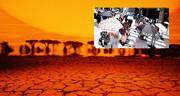 استرالیا در تب گرمای ۵۰ درجه
