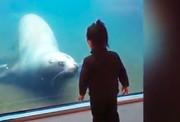دنیای دیدنی بچهها و حیوانات
