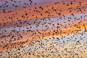 عوامل تهدید پرندگان مهاجر کدامها هستند؟