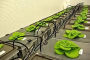 کاشت گیاه در فضا با تولید خاک مصنوعی ممکن شد
