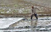 شخم زمستانه راهکار مصرف آب کمتر برای تولید برنج گیلان