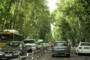 آغاز فاز دوم پروژه ساماندهی و احیاء درختان خیابان ولیعصر(عج)