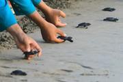 عکس روز: بچه لاک پشتها