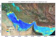 حرکت شکوفایی جلبکی نوکتی لیکا از دریای عمان به سمت خلیجفارس