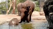 فرار حیوانات از گرما | باغ وحش تارونگای استرالیا