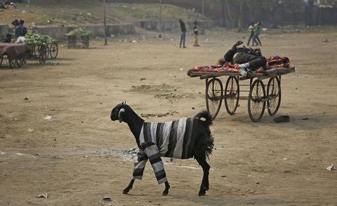 هند - لباس تنش کردهاند