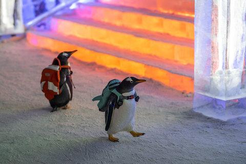مدرسه پنگوئنها در فستیوال زمستانی چین