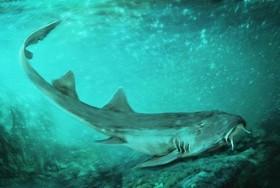 کشف دندانهای کوسه ۶۷ میلیون ساله