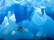 فیلم | ۴ دقیقه در قاره جنوبگان