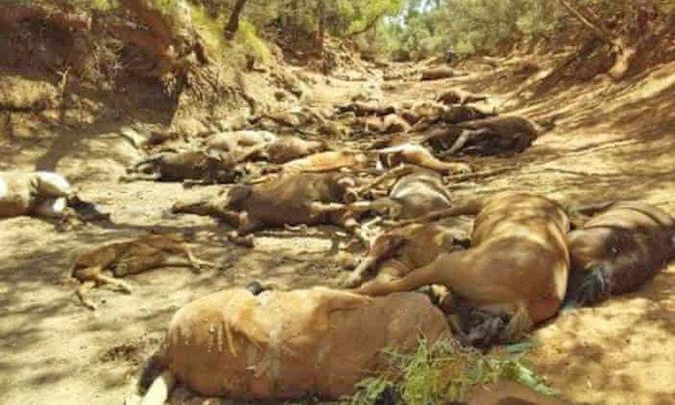 مرگ 40 اسب در استراليا