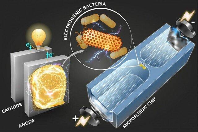 تولید برق از باکتري