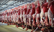 مصوبه جدید دولت برای کاهش قیمت گوشت قرمز | واردات گوشت بدون تعرفه گمرکی