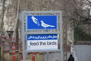 جانمایی دانهریزی برای پرندگان