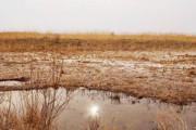 آبگیری ٦ هزار هکتار از تالاب بندعلیخان در زمستان امسال