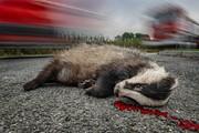 گاردین | طبیعت بحرانزده بریتانیا