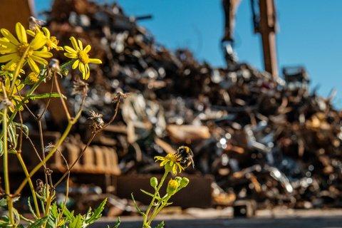 گلها در حصار زبالهها