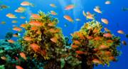 تاثیر تغییرات آب و هوا بر باروری گونههای زیستی