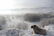عکس روز | چشمانداز زمستانی