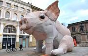 عکس روز | بچه خوک منچستر