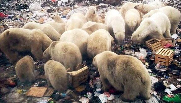 هجوم خرسهاي قطبي