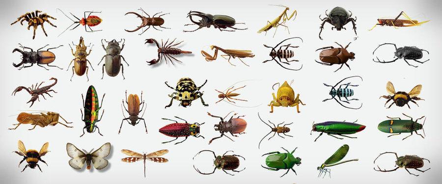 ۱۰۰ سال دیگر حشرات منقرض میشوند