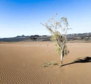 ۳۰ درصد از کانونهای فرسایش بادی کشور، کانون بحرانی درجه یک هستند