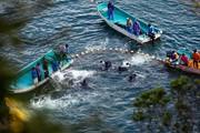 تلاش کنشگران برای جلوگیری کشتار دلفینها در ژاپن