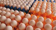تخممرغ روی دست مرغدار مانده است اما از خارج هم وارد میشود